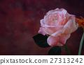 artificial pink rose, close copy space 27313242