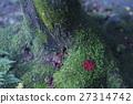 moss, maple, yellow 27314742