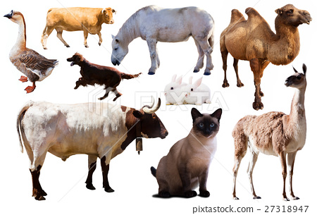 collection farm animals 27318947