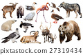 Set of bear and other european animals 27319434