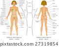 医疗 女性 女 27319854