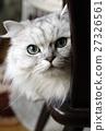 貓 貓咪 小貓 27326561