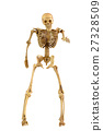 Human skeleton bone standing action 27328509