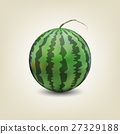 Photo realistic watermelon, vector illustration. 27329188