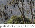 動物 棒球棒 蝙蝠 27338722