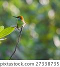 bee-eater bird avian 27338735