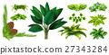 植物 開花 植物學 27343284