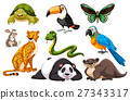 Different kinds of wild animals 27343317