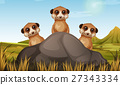 meerkat, rock, field 27343334