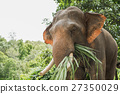 Elephant eat grass at the zoo 27350029