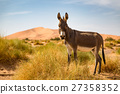 Donkey on the Sahara Desert 27358352