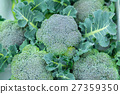 브로콜리 농가에서 야채 겨울 야채 잎 십자화과 27359350