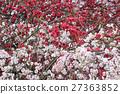 桃花 桃子 水蜜桃 27363852