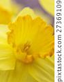 花朵 花 花卉 27369109