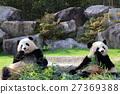 熊猫 动物 动物园 27369388