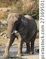 elephant, elephants, animal 27369501