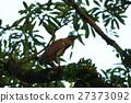 森林 树林 行动 27373092