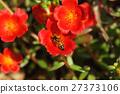 蜜蜂 晴天 花 27373106
