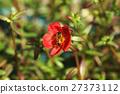 蜜蜂 植物 花朵 27373112