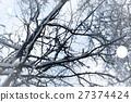 winter, tree, trees 27374424