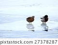 野鴨 鳥兒 鳥 27378287