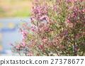 에리카의 꽃 27378677