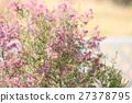 에리카의 꽃 27378795