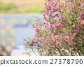 에리카의 꽃 27378796