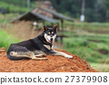 black handsome young dog in a rural field. 27379908