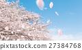 ดอกซากุระบาน,ซากุระบาน,กลีบ 27384768