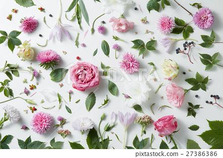 elegant background of pink roses 27386386