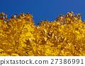 Yellow autumn leaves 27386991