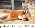 Kangaroo 27391044