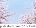 벚나무, 왕벚나무, 벚꽃 눈보라 27391546