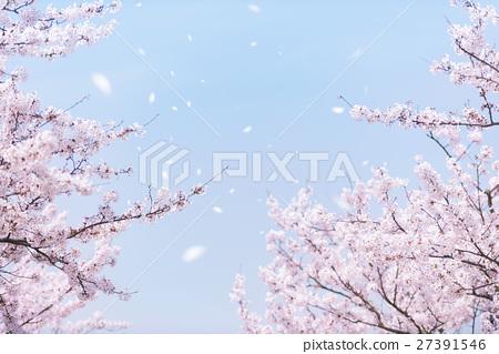 SakuraFubuki 27391546