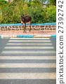 摩洛哥 动物 驴 27392742
