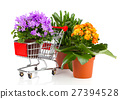 blue campanula in the shopping cart and kalanchoe 27394528