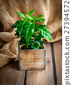 coffee plant treeon sackcloth, wooden background 27394572