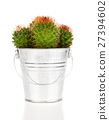 cactus, on white background 27394602