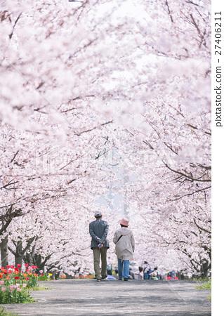 櫻花和櫻花 27406211