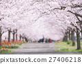 ดอกซากุระบาน,ซากุระบาน,แนวต้นไม้ริมถนน 27406218
