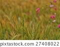 小麥 27408022