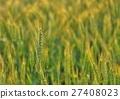 小麥 27408023