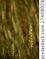 小麥 27408028