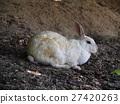 兔子在Okunoshima(Usagi島) 27420263