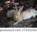 兔子在Okunoshima(Usagi島) 27420266