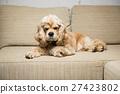 spaniel,sofa,dog 27423802