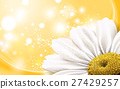chamomile flower element 27429257