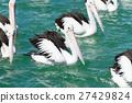 鵜鶘 鳥 鳥兒 27429824
