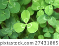 leaf clover 27431865